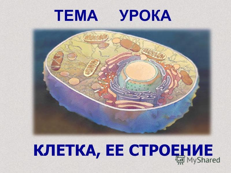 ТЕМА УРОКА КЛЕТКА, ЕЕ СТРОЕНИЕ