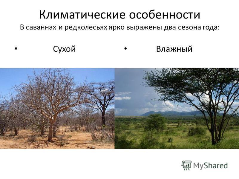 Климатические особенности В саваннах и редколесьях ярко выражены два сезона года: Сухой Влажный