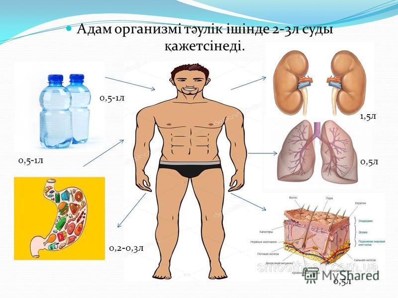 Адам организмі т ә улік ішінде 2-3 л суды қ ажетсінеді. 0,5-1 л 0,2-0,3 л 1,5 л 0,5 л