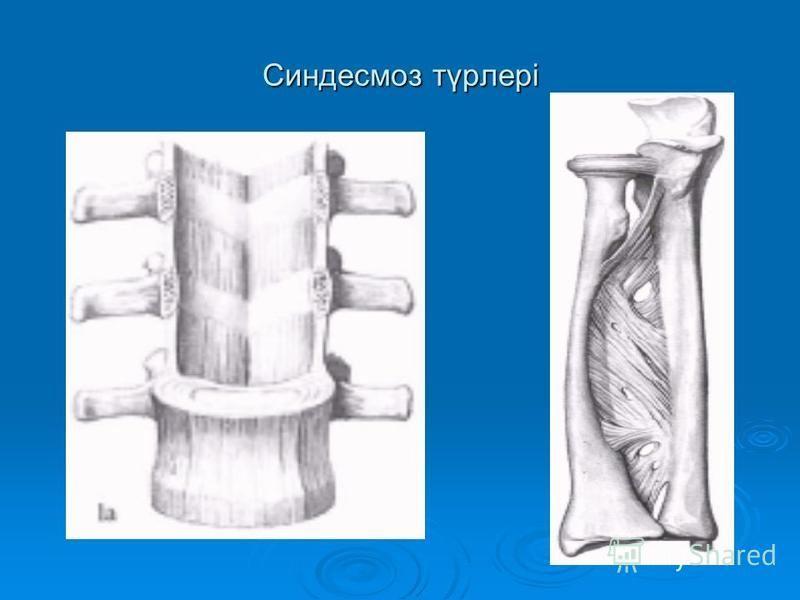 Синдесмоз түрлері