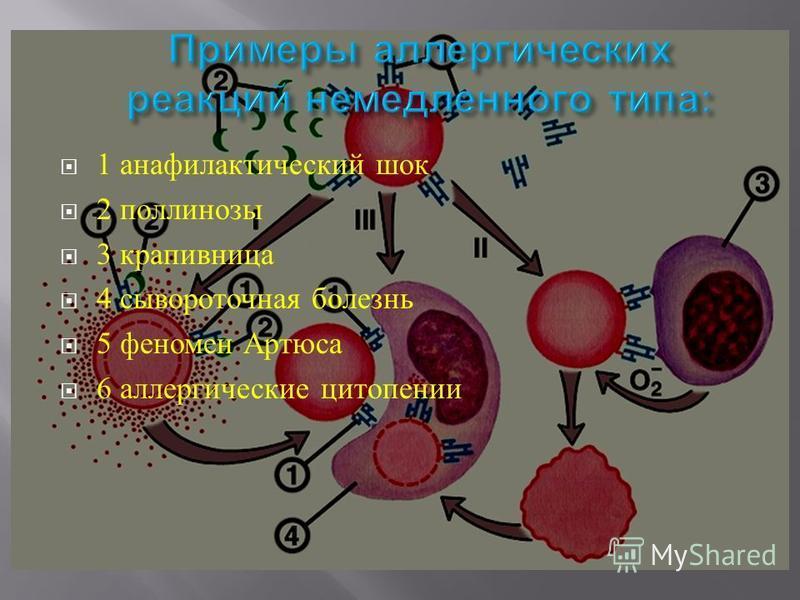 1 анафилактический шок 2 поллинозы 3 крапивница 4 сывороточная болезнь 5 феномен Артюса 6 аллергические цитопении