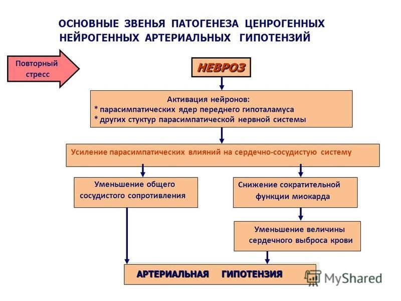 Активация нейронов: * парасимпатических ядер переднего гипоталамуса ОСНОВНЫЕ ЗВЕНЬЯ ПАТОГЕНЕЗА ЦЕНРОГЕННЫХ НЕЙРОГЕННЫХ АРТЕРИАЛЬНЫХ ГИПОТЕНЗИЙ * других структур парасимпатической нервной системы НЕВРОЗ АРТЕРИАЛЬНАЯ ГИПОТЕНЗИЯ Усиление парасимпатическ