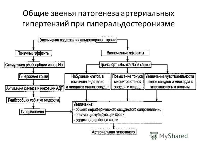Общие звенья патогенеза артериальных гипертензий при гиперальдостеронизме
