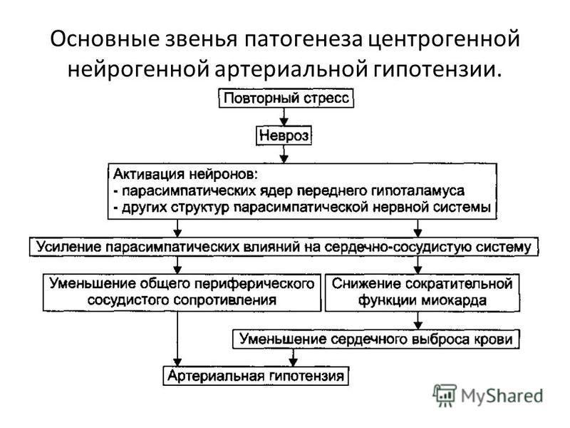 Основные звенья патогенеза центрогенной нейрогенной артериальной гипотензии.