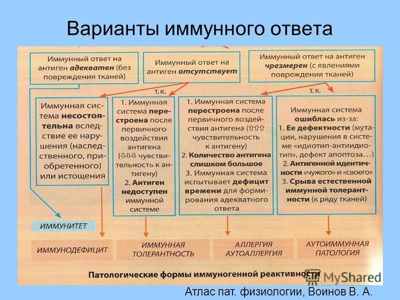 Варианты иммунного ответа Атлас пат. физиологии, Воинов В. А.