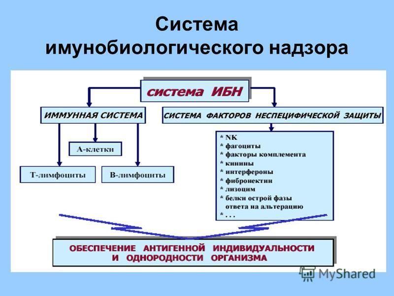 Система иммунобиологического надзора