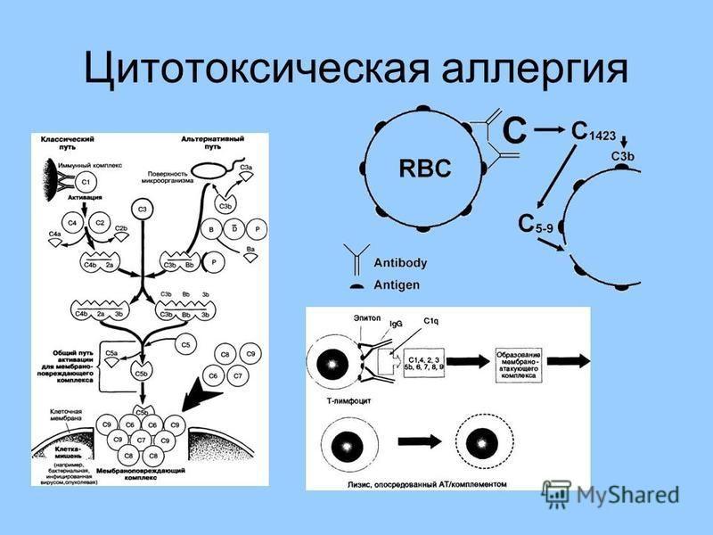 Цитотоксическая аллергия
