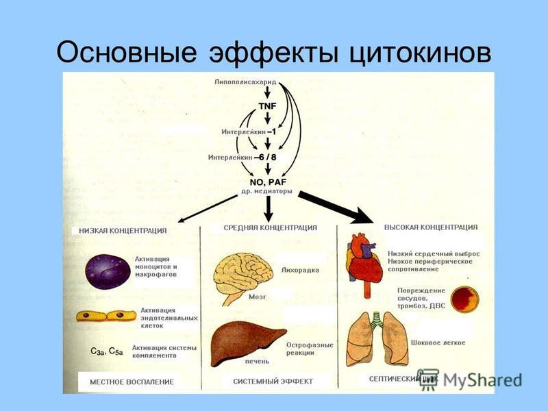 Основные эффекты цитокинов