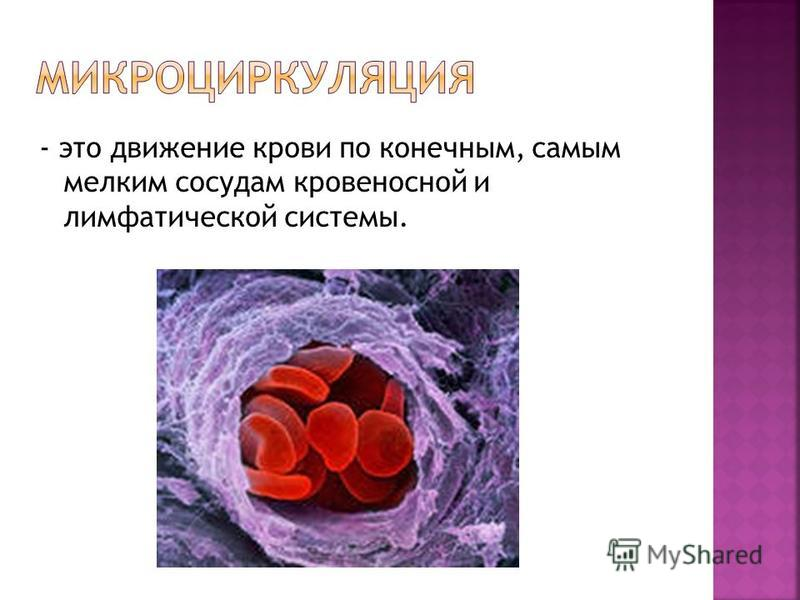 - это движение крови по конечным, самым мелким сосудам кровеносной и лимфатической системы.