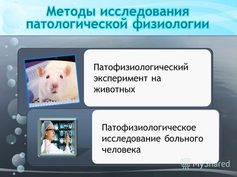 Патофизиологический эксперимент на животных Патофизиологическое исследование больного человека