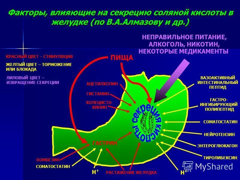 Факторы, влияющие на секрецию соляной кислоты в желудке (по В.А.Алмазову и др.) АЦЕТИЛХОЛИН ГИСТАМИН ХОЛЕЦИСТО- КИНИН КРАСНЫЙ ЦВЕТ – СТИМУЛЯЦИЯ ЖЕЛТЫЙ ЦВЕТ – ТОРМОЖЕНИЕ ИЛИ БЛОКАДА ГАСТРИН БОМБЕЗИН СОМАТОСТАТИН Н+Н+ РАСТЯЖЕНИЕ ЖЕЛУДКА ВАЗОАКТИВНЫЙ ИН