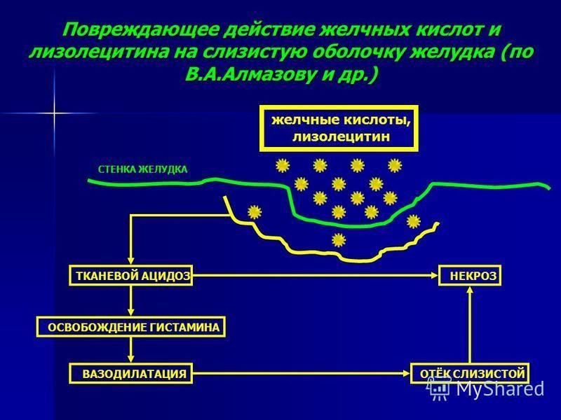 Повреждающее действие желчных кислот и лизолецитина на слизистую оболочку желудка (по В.А.Алмазову и др.) желчные кислоты, лизолецитин СТЕНКА ЖЕЛУДКА ТКАНЕВОЙ АЦИДОЗ ОСВОБОЖДЕНИЕ ГИСТАМИНА ВАЗОДИЛАТАЦИЯ НЕКРОЗ ОТЁК СЛИЗИСТОЙ