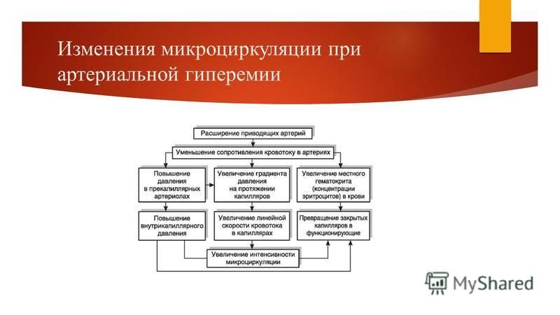 Изменения микроциркуляции при артериальной гиперемии