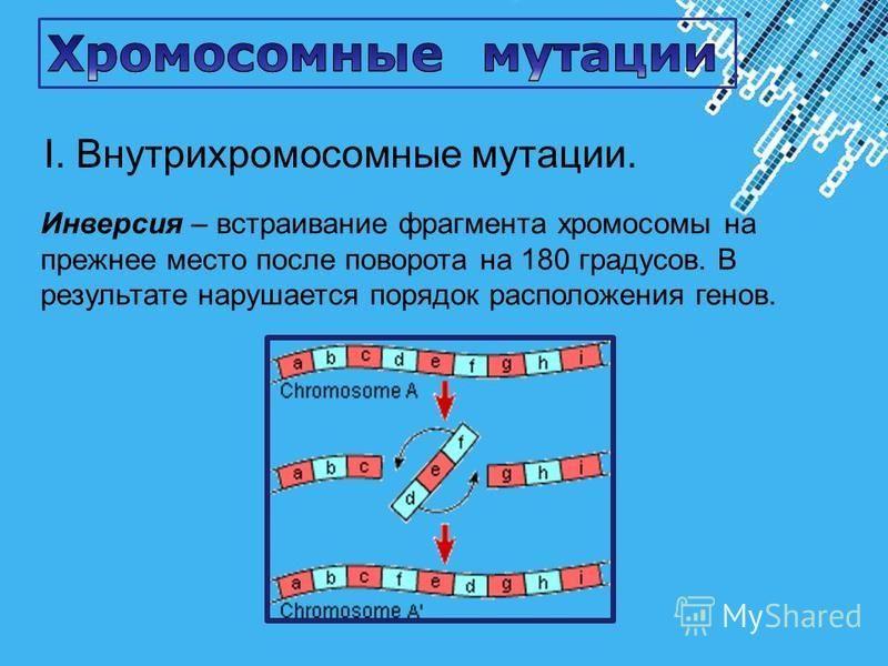 Powerpoint Templates Page 30 Инверсия – встраивание фрагмента хромосомы на прежнее место после поворота на 180 градусов. В результате нарушается порядок расположения генов. I. Внутрихромосомные мутации.