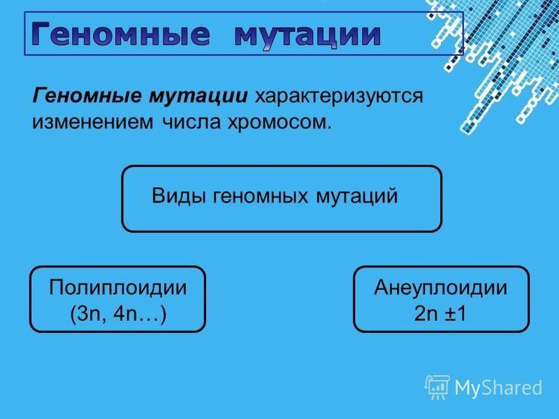 Powerpoint Templates Page 32 Геномные мутации характеризуются изменением числа хромосом. Виды геномных мутаций Анеуплоидии 2n ±1 Полиплоидии (3n, 4n…)