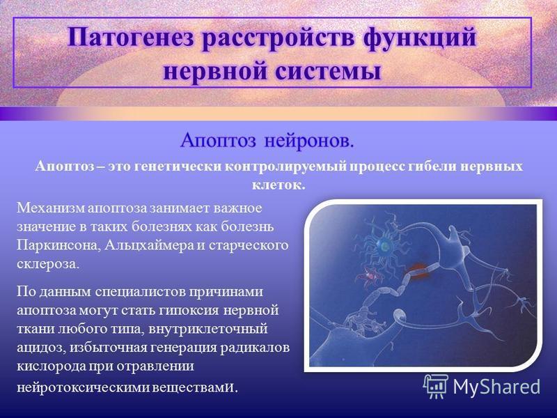 Апоптоз – это генетически контролируемый процесс гибели нервных клеток. Механизм апоптоза занимает важное значение в таких болезнях как болезнь Паркинсона, Альцхаймера и старческого склероза. По данным специалистов причинами апоптоза могут стать гипо