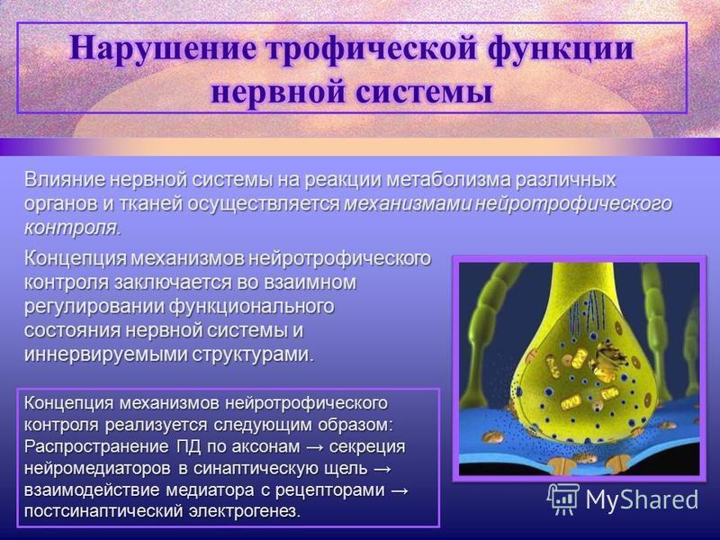 Влияние нервной системы на реакции метаболизма различных органов и тканей осуществляется механизмами нейротрофического контроля. Концепция механизмов нейротрофического контроля заключается во взаимном регулировании функционального состояния нервной с