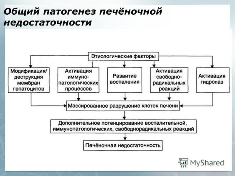 Общий патогенез печёночной недостаточности