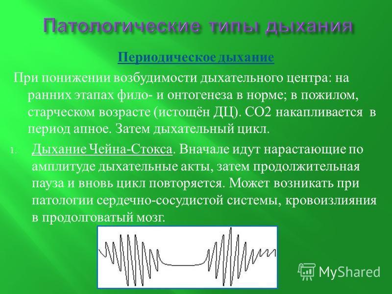 Периодическое дыхание При понижении возбудимости дыхательного центра : на ранних этапах фило - и онтогенеза в норме ; в пожилом, старческом возрасте ( истощён ДЦ ). СО 2 накапливается в период апноэ. Затем дыхательный цикл. 1. Дыхание Чейна - Стокса.