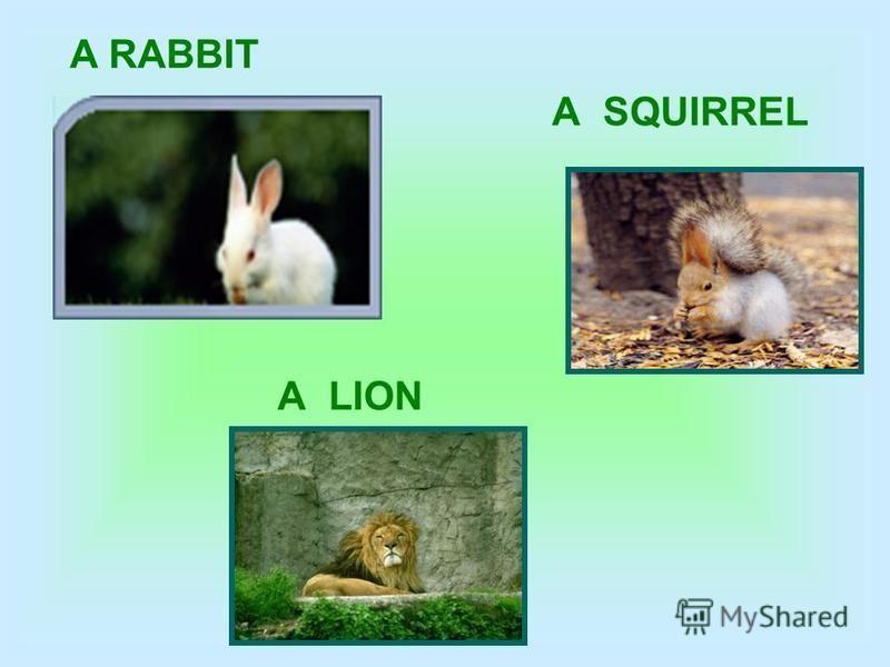 A RABBIT A SQUIRREL A LION