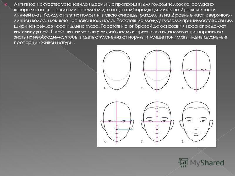 Античное искусство установило идеальные пропорции для головы человека, согласно которым она по вертикали от темени до конца подбородка делится на 2 равные части линией глаз. Каждую из этих половин, в свою очередь, разделить на 2 равные части: верхнюю