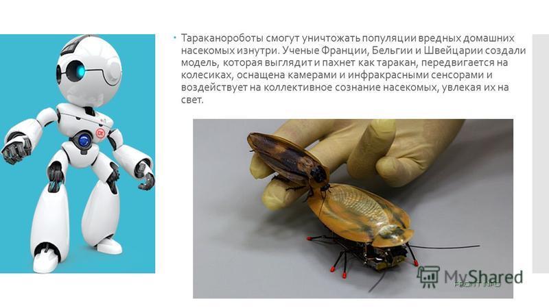 Тараканороботы смогут уничтожать популяции вредных домашних насекомых изнутри. Ученые Франции, Бельгии и Швейцарии создали модель, которая выглядит и пахнет как таракан, передвигается на колесиках, оснащена камерами и инфракрасными сенсорами и воздей