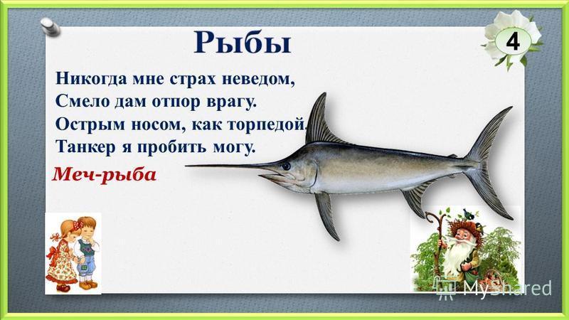 Меч-рыба Никогда мне страх неведом, Смело дам отпор врагу. Острым носом, как торпедой, Танкер я пробить могу. 4