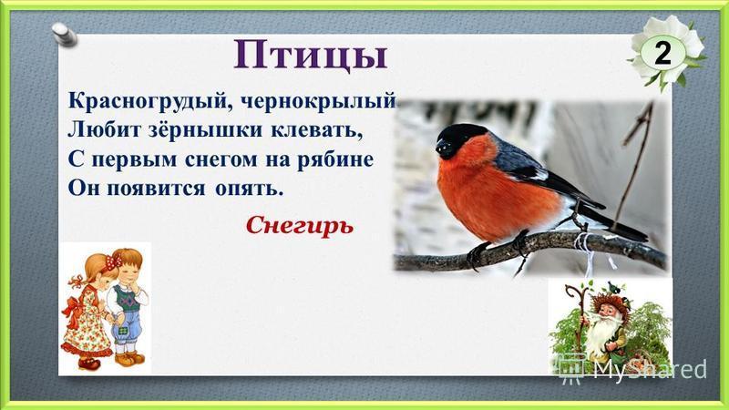 Снегирь 2 Красногрудый, чернокрылый, Любит зёрнышки клевать, С первым снегом на рябине Он появится опять.