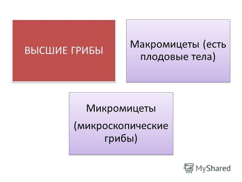 ВЫСШИЕ ГРИБЫ Макромицеты (есть плодовые тела) Микромицеты (микроскопические грибы)