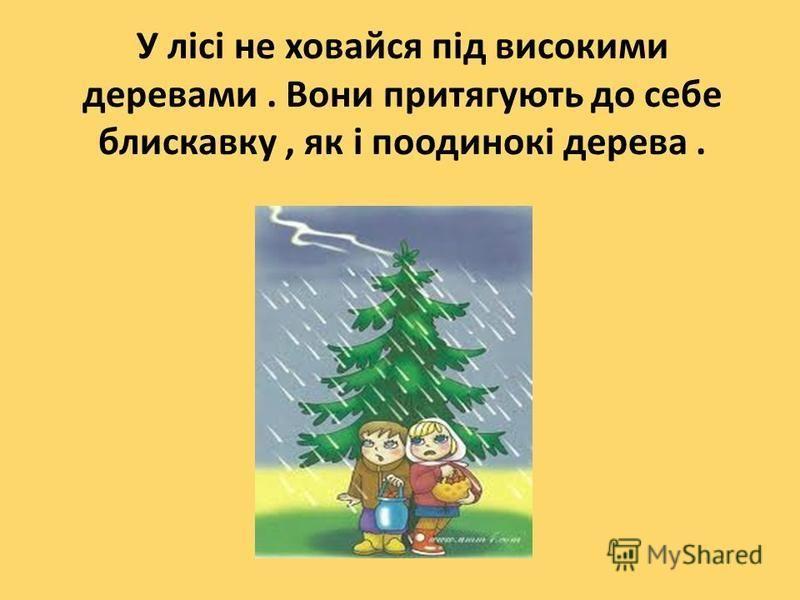 У лісі не ховайся під високими деревами. Вони притягують до себе блискавку, як і поодинокі дерева.