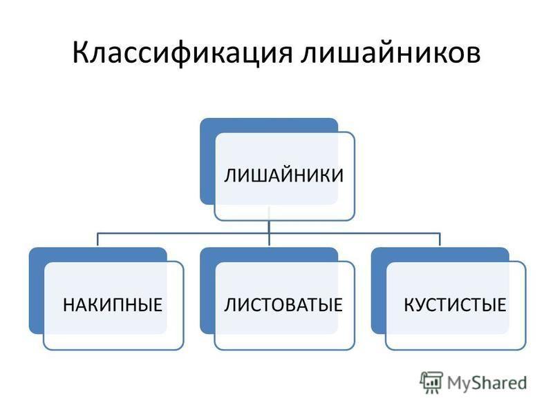 Классификация лишайников ЛИШАЙНИКИНАКИПНЫЕЛИСТОВАТЫЕКУСТИСТЫЕ