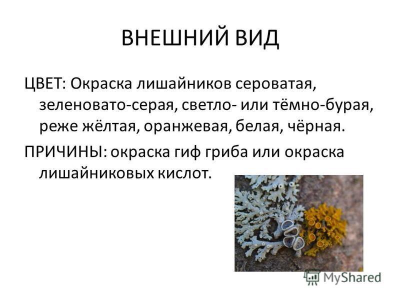 ВНЕШНИЙ ВИД ЦВЕТ: Окраска лишайников сероватая, зеленовато-серая, светло- или тёмно-бурая, реже жёлтая, оранжевая, белая, чёрная. ПРИЧИНЫ: окраска гиф гриба или окраска лишайниковых кислот.