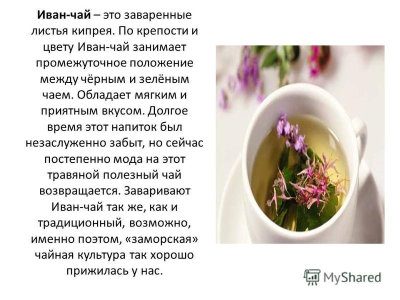 Иван-чай – это заваренные листья кипрея. По крепости и цвету Иван-чай занимает промежуточное положение между чёрным и зелёным чаем. Обладает мягким и приятным вкусом. Долгое время этот напиток был незаслуженно забыт, но сейчас постепенно мода на этот