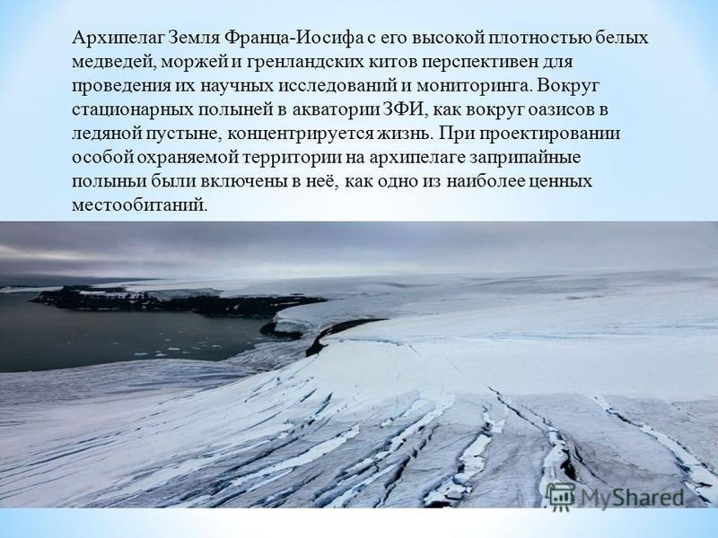 Архипелаг Земля Франца-Иосифа с его высокой плотностью белых медведей, моржей и гренландских китов перспективен для проведения их научных исследований и мониторинга. Вокруг стационарных полыней в акватории ЗФИ, как вокруг оазисов в ледяной пустыне, к