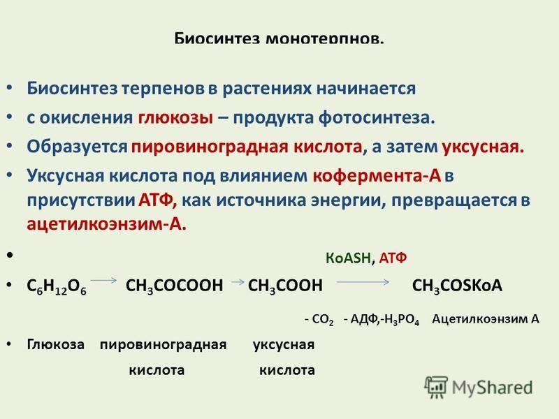 Биосинтез монотерпенов. Биосинтез терпенов в растениях начинается с окисления глюкозы – продукта фотосинтеза. Образуется пировиноградная кислота, а затем уксусная. Уксусная кислота под влиянием кофермента-А в присутствии АТФ, как источника энергии, п