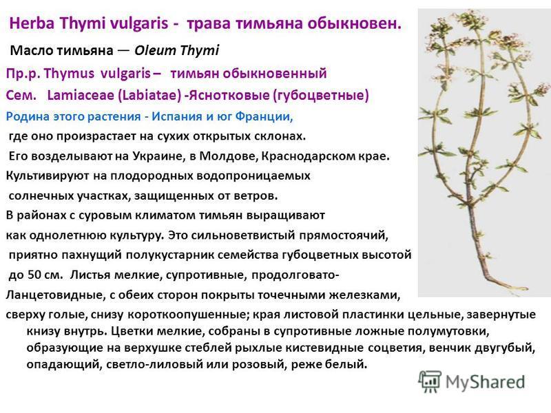 Herba Thymi vulgaris - трава тимьяна обыкновен. Масло тимьяна Oleum Thymi Пр.р. Thymus vulgaris – тимьян обыкновенный Сем. Lamiaceae (Labiatae) -Яснотковые (губоцветные) Родина этого растения - Испания и юг Франции, где оно произрастает на сухих откр