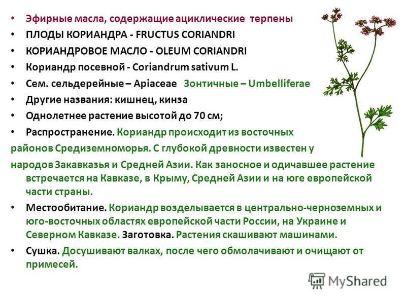Эфирные масла, содержащие ациклические терпены ПЛОДЫ КОРИАНДРА - FRUCTUS CORIANDRI КОРИАНДРОВОЕ МАСЛО - OLEUM CORIANDRI Кориандр посевной - Coriandrum sativum L. Сем. сельдерейные – Apiaceae Зонтичные – Umbelliferae Другие названия: кишнец, кинза Одн