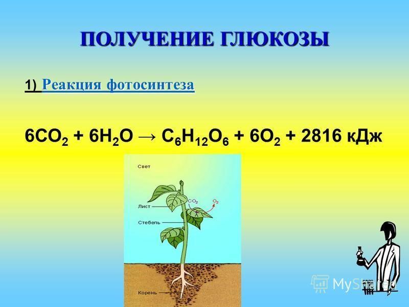 ПОЛУЧЕНИЕ ГЛЮКОЗЫ Реакция фотосинтеза Реакция фотосинтеза 1) Реакция фотосинтеза Реакция фотосинтеза 6СО 2 + 6H 2 O С 6 Н 12 О 6 + 6О 2 + 2816 к Дж