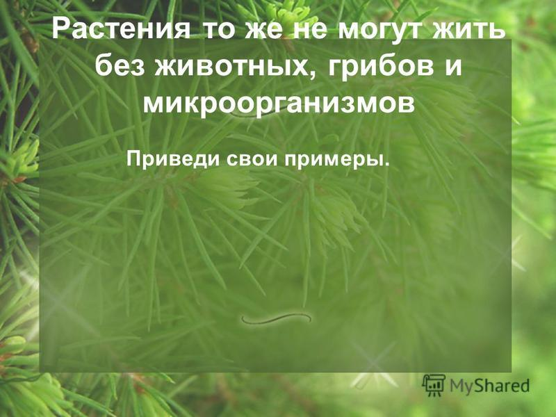 Растения то же не могут жить без животных, грибов и микроорганизмов Приведи свои примеры.
