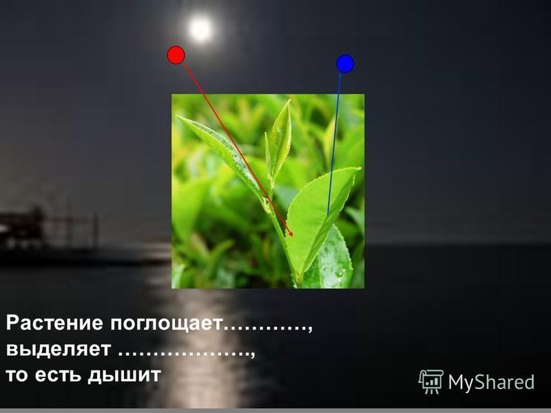 Растение поглощает…………, выделяет ………………., то есть дышит
