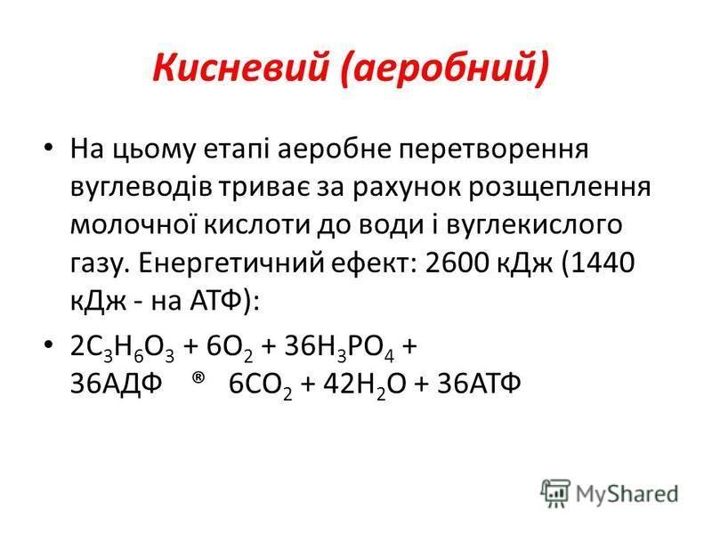 Кисневий (аеробний) На цьому етапі аеробне перетворення вуглеводів триває за рахунок розщеплення молочної кислоти до води і вуглекислого газу. Енергетичний ефект: 2600 кДж (1440 кДж - на АТФ): 2С 3 Н 6 О 3 + 6О 2 + 36Н 3 РО 4 + 36АДФ ® 6СО 2 + 42Н 2