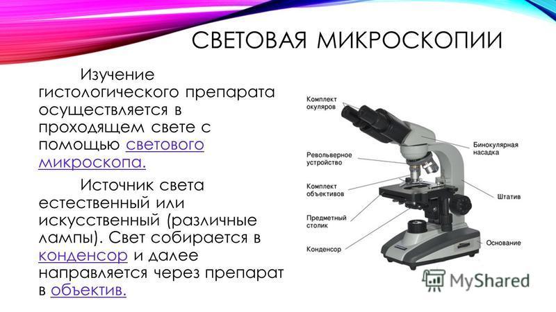 СВЕТОВАЯ МИКРОСКОПИИ Изучение гистологического препарата осуществляется в проходящем свете с помощью светового микроскопа. Источник света естественный или искусственный (различные лампы). Свет собирается в конденсор и далее направляется через препара