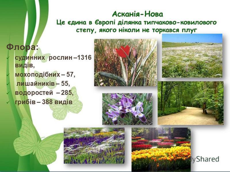 Флора: судинних рослин –1316 видів, мохоподібних – 57, лишайників – 55, водоростей – 285, грибів – 388 видів