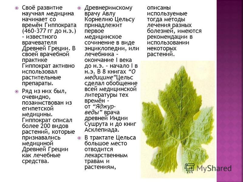 Своё развитие научная медицина начинает со времён Гиппократа (460-377 гг до н.э.) – известного врачевателя Древней Греции. В своей врачебной практике Гиппократ активно использовал растительные препараты. Ряд из них был, очевидно, позаимствован из еги