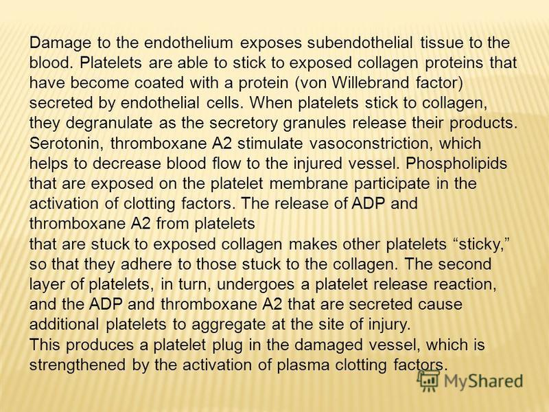 Damage to the endothelium exposes subendothelial tissue to the blood. Platelets are able to stick to exposed collagen proteins that have become coated with a protein (von Willebrand factor) secreted by endothelial cells. When platelets stick to colla