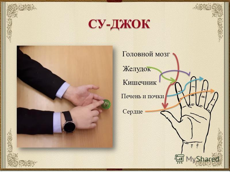 Головной мозг Желудок Кишечник Печень и почки Сердце СУ-ДЖОК