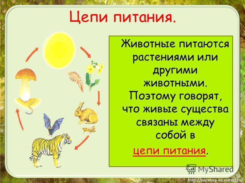 Животные питаются растениями или другими животными. Поэтому говорят, что живые существа связаны между собой в цепи питания. Цепи питания.