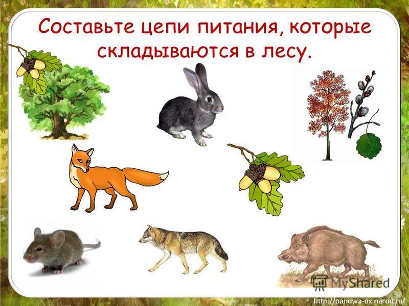 Составьте цепи питания, которые складываются в лесу.