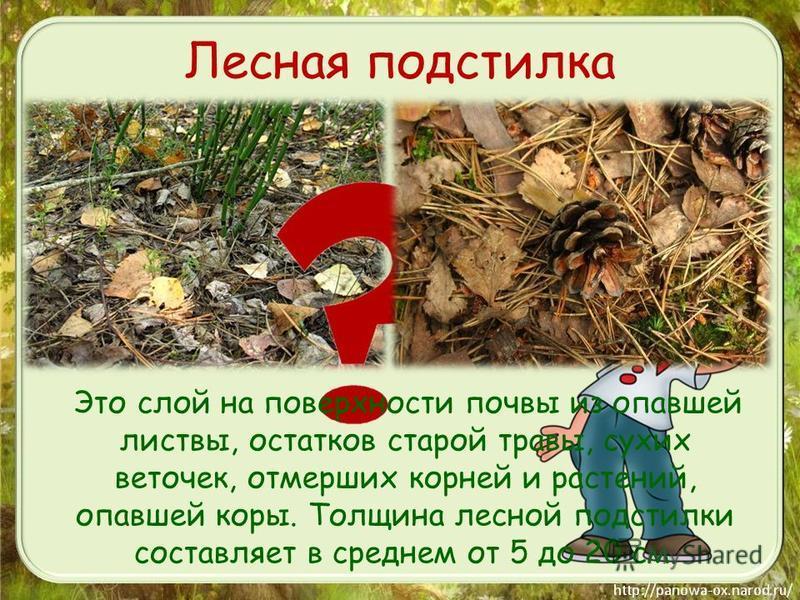 Лесная подстилка Это слой на поверхности почвы из опавшей листвы, остатков старой травы, сухих веточек, отмерших корней и растений, опавшей коры. Толщина лесной подстилки составляет в среднем от 5 до 20 см.