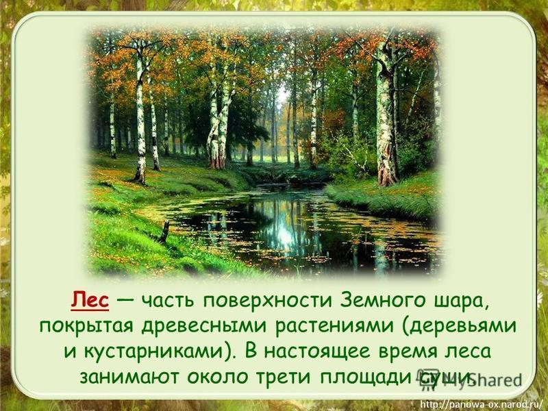 Лес часть поверхности Земного шара, покрытая древесными растениями (деревьями и кустарниками). В настоящее время леса занимают около трети площади суши.